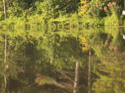 Joe-Pye Weed Reflecting on Otter Lake