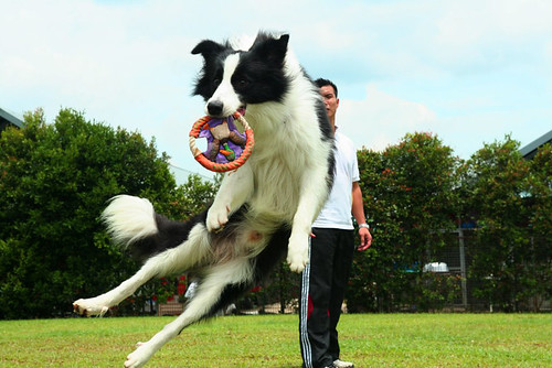Getting the frisbee