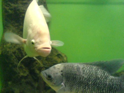 Fishy Fish - 2006