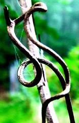 grape tendril