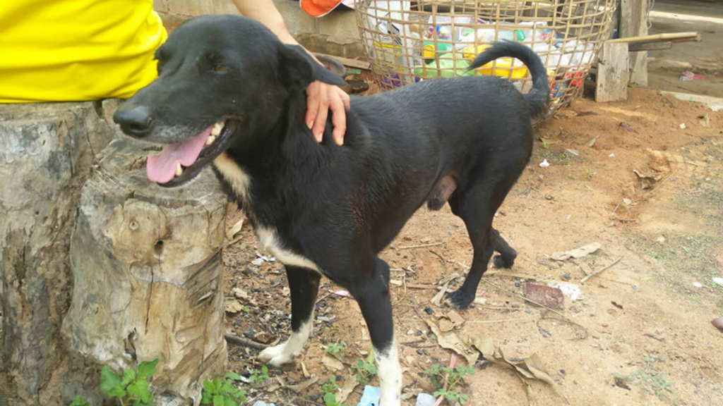 Image result for Hero dog saves life of newborn after teen mom buries boy alive in Thailand