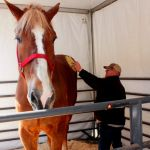 Big Jake, world's tallest horse dies at age 20 in Wisconsin 💥💥💥💥