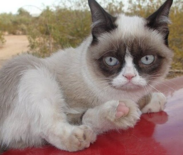 Funny Grumpy Cat Memes For Any Occasion