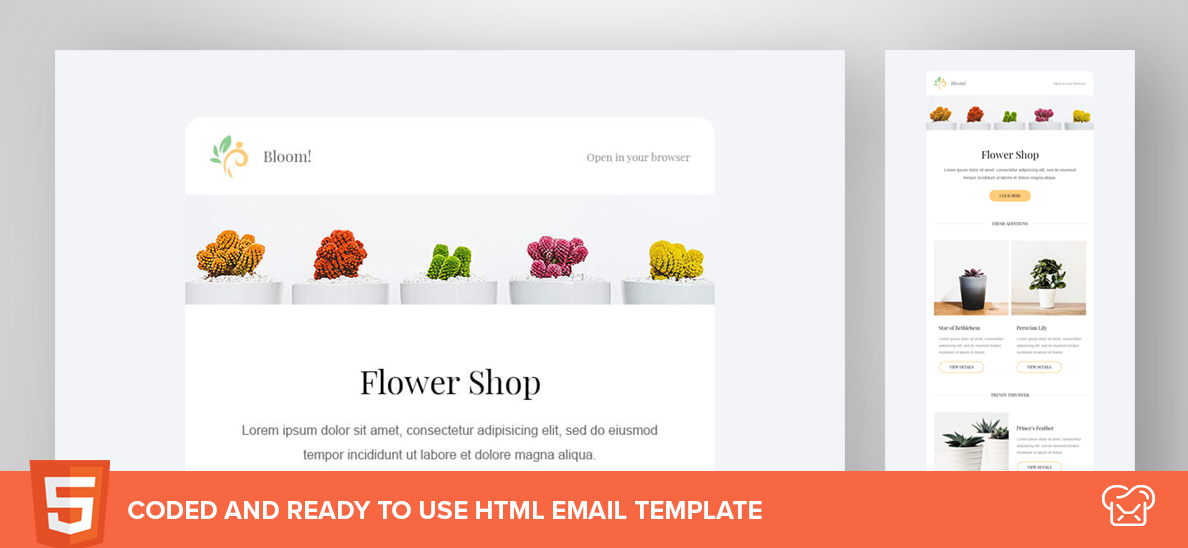 Bloom! – Free HTML Email Template