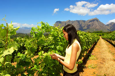 Full Day Winelands Tour Thumbnail
