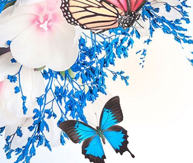 Butterfly Wallpaper Hd For Android Screenshot 1 6
