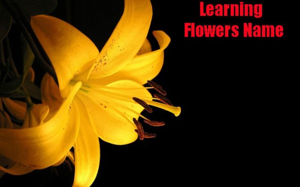 Free Kids Learning Flowers Name APK Download For Android   GetJar Kids Learning Flowers Name screenshot 1 3