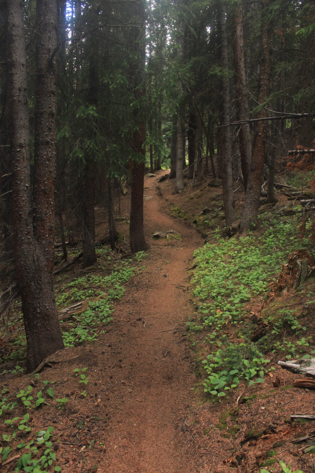 A wonderfully smooth stretch of singletrack slithering through a spruce forest.      Richard Forbes