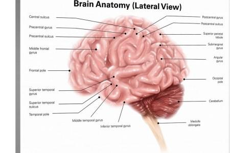 interior brain anatomy » Full HD MAPS Locations - Another World ...