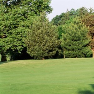 Golf course Swan Point Yacht Country Club Issue Charles County     Trees on a golf course  Woodholme Country Club  Baltimore  Maryland