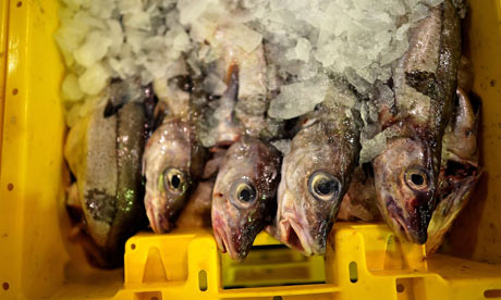 Maria Damanaki on fisheries : Traders And Buyers Attend The Daily Grimsby Fish Market Auction