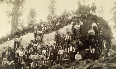 Leo blog on mammoth tree : Over 100 people stand atop of and around a logged giant sequoia tree