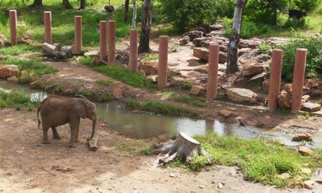 MDG : Mark Tran in Mali : national zoo in Bamako