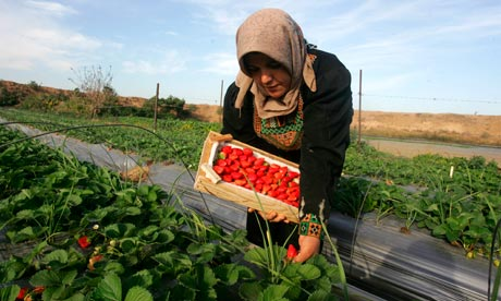 Gaza farmer