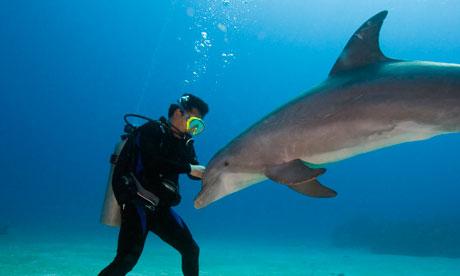 A dolphin with a scuba diver