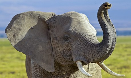 An elephant points the way