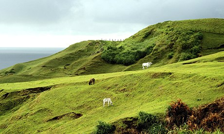 animals grazing on hills