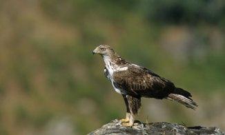 An eagle in Spain