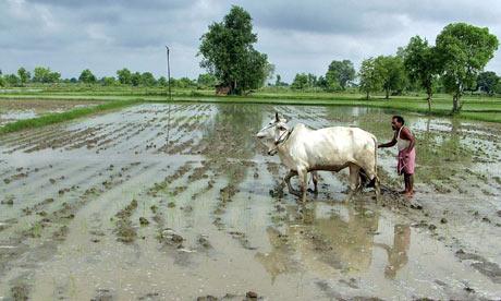A farmer ploughs his field as UN warns of Asia food crisis