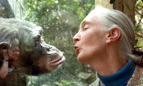 Jane Goodall and her chimp companion.