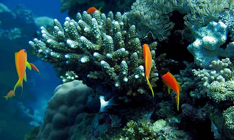 Coral reefs in the Red Sea north of Jeddah
