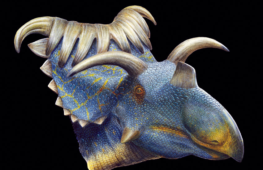 Kospoceratops richardsoni