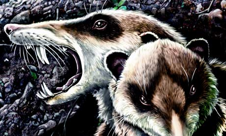 Reconstruction of Cronopio dentiacutus in its native environment during the early Late Cretaceous. Image: Jorge Gonzalez/Guillermo Rougier