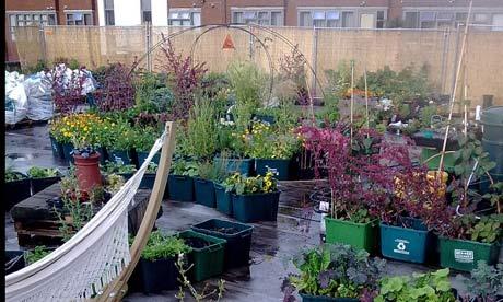 Budgens' rooftop garden.