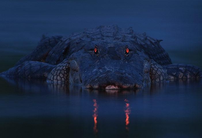 Veolia: Warning night light