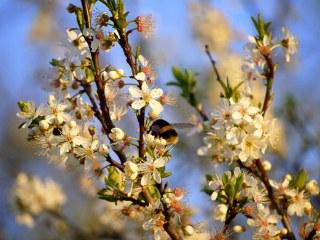 April 2012 Flickr group o 016