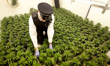https://i2.wp.com/static.guim.co.uk/sys-images/Guardian/Pix/pictures/2012/7/26/1343306619063/cannabis-factory-in-a-hou-008.jpg