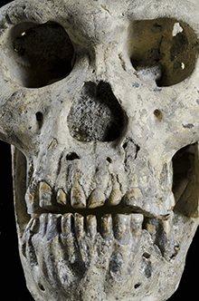 Homo erectus skull found in Georgia