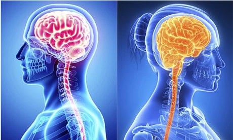 brains illustration male female