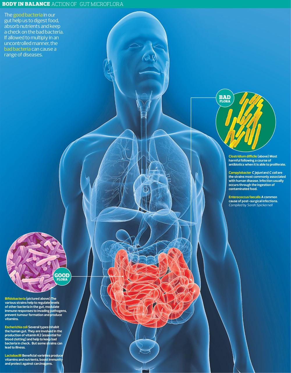 Lactobacillus Bacteria Infection