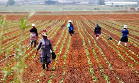farm workers in a field at a farm in Klippoortie