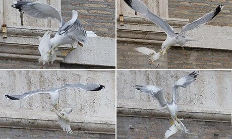 Una gaviota ataca la paloma de la paz del farsante