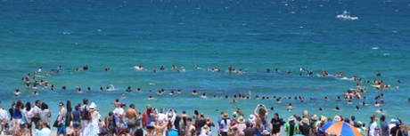 surf circle shark