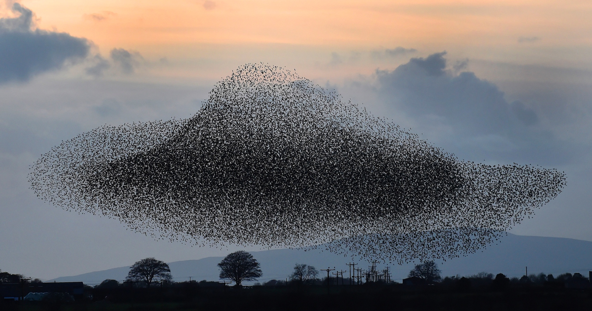 Image result for starling murmuration