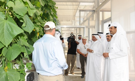 Cucumbers in Qatar … The Sahara Forest Project is already showing results.