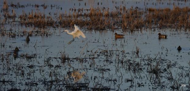A Bird's-Eye View of Fishing (5/6)