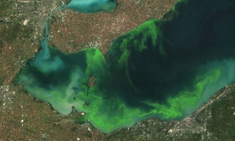 lake erie algal bloom 2011