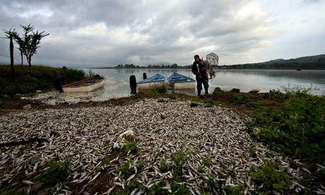 Dead fish at Mexican lake