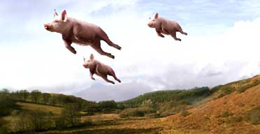 Image result for pigs in flight