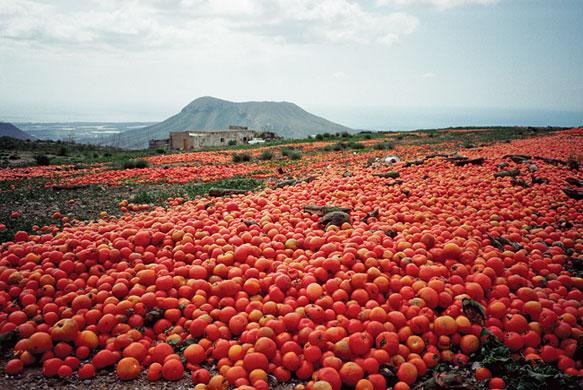 Surplus tomatoes dumped on farmland in Tenerife