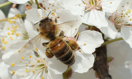 Beekeepers report higher loss rates In bee population