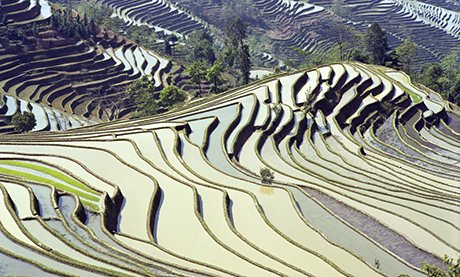 Yunnan rice terraces, China