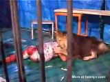 Lion Tamer Having A Bad Day At Working