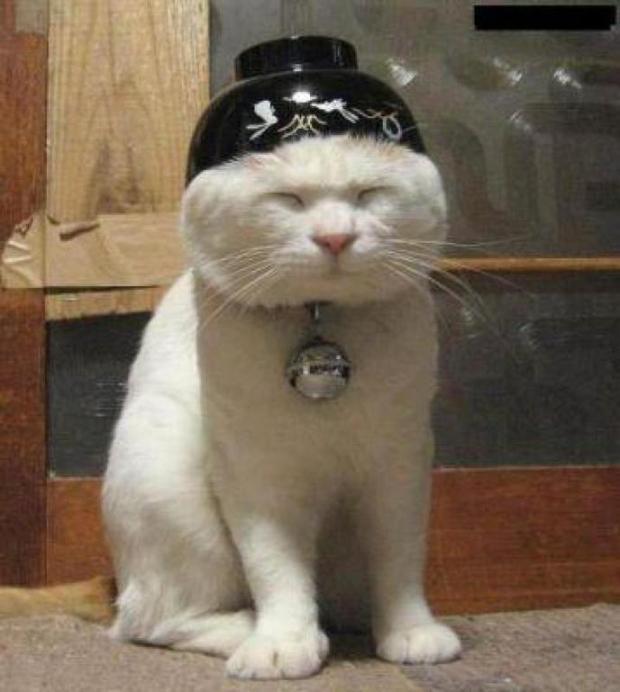 top fait amusant chats 12