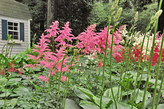 Flowering Shade Plants   Colorful Plants for Shade   Curb Appeal Tips