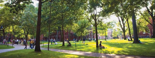После обучения в Гарварде у вас есть 1-3 лет, чтобы найти работу в США